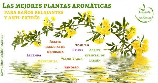 remedios naturales para el estres plantas aromaticas